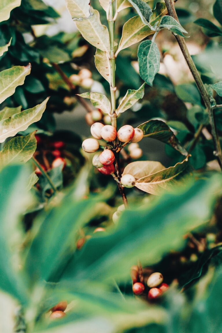 Read more about the article קפה אורגני: דברים שכדאי לדעת על פולי קפה אורגניים